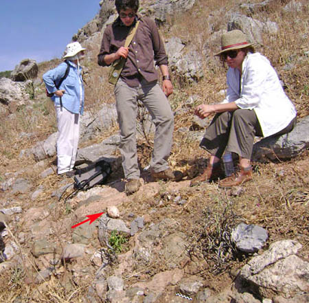 Survey team examine a stone tool found on the marine terrace below cave.